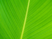 Close up of green leaf texture Stock Images