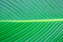 Close up green leaf texture background. Plant Royalty Free Stock Photos