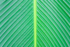 Close up green leaf texture background. Plant Stock Photo