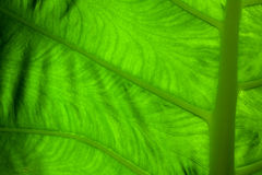 Close up green leaf Stock Images
