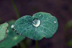 Close-up of a green leaf with water drops for background . Stock Images