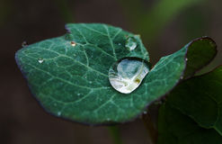 Close-up of a green leaf with water drops for background . Royalty Free Stock Image