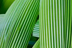 Close up of green leave Royalty Free Stock Image