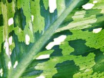 Green leave natur abtract background royalty free stock photos