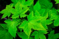 Close up of green leaves Stock Photos