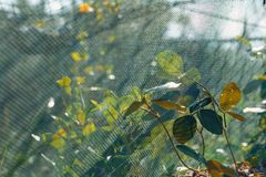 Close up of green leaves on fish net on the beach royalty free stock photography
