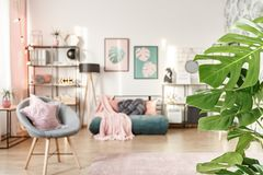 Close-up of green leaves. In girl`s bedroom interior with grey armchair near green futon Royalty Free Stock Photos