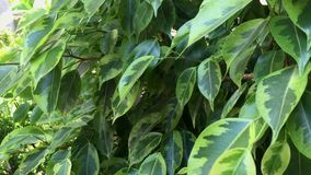 Close up green leaves stock footage