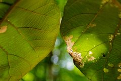 Close up of green leaves texture under natural light with sunbeam spot , shallow dept of field and bokeh Stock Photo
