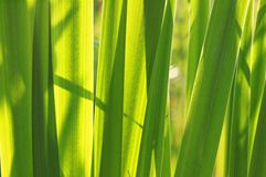 Close up of green leaves Stock Photography