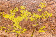 Close up of green lichen on granite rocks Royalty Free Stock Images
