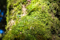 Close up green lichen moss plant grow Stock Image