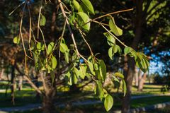 Green leaves on a tree stock images