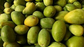 Close up of Green mangoes stock video