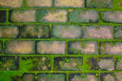 Close up green mos on old brick footpath royalty free stock photo