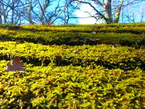 Close-up of green moss with brown fallen leaves from trees royalty free stock photos