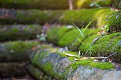 Close up green moss and grass growing on brick floor. Selective focus Stock Photo