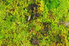 Close up of green moss Stock Photo