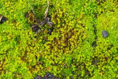 Close up of green moss Stock Image