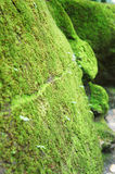 Close-up Moss on rock Stock Photography