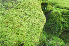 Close-up Moss on rock Stock Images