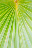 Close up green nature Stock Photo