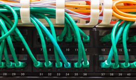 Close up of green network cables connected to switch Stock Photos