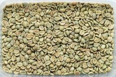 Arabica coffee beans. Close-up green no roasted Arabica coffee beans in container, texture, background Royalty Free Stock Photo