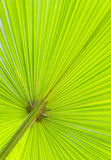 Close up of green palm leave Stock Photos