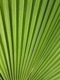 CLose up of green Palm Tree Leaf. Close up of a green Palm Tree leaf suitable for background Stock Images