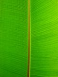 Close-up of green plant leaf Royalty Free Stock Photos