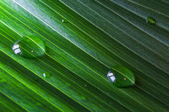 Close-up of green plant leaf with water drops background Royalty Free Stock Photography