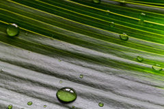 Close-up of green plant leaf with water drops background Stock Image