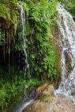 Close up Green Plants at the Water Falls. Close up Green Fern Plants at Tranquil Waterfalls with Big Rocks Stock Image