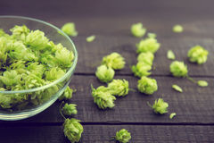 Close up of green ripe hop cones in a glass bowl over dark rustic wooden background. Beer production ingredient. stock image