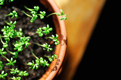 Close-up of green seedling. Picture of small bud growing up Stock Images