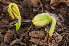 Close-up of green seedling growing Stock Image