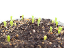 Close-up Green seedlings royalty free stock photography
