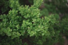 Close-up of green tree bush on flowerbed royalty free stock photos