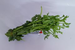 Close-up of green vegetables on shopping carts about online vegetable sales.  White background. Close-up green vegetables shopping carts online sales white royalty free stock photo