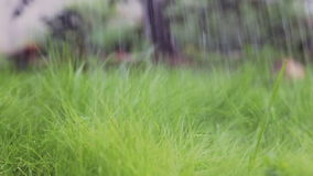 Close-up on a green young lawn. Hand watering with a watering can. stock video footage