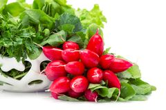 Close up of greens and radish in white bowl stock photography