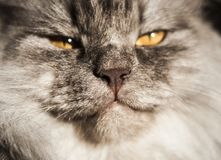 nice gray cat Stock Images