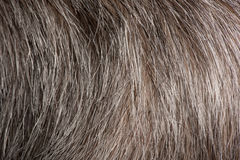 Close-up of grey human hair Stock Photo