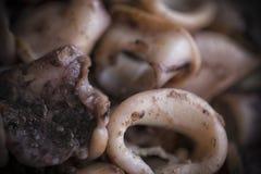 Grilled Calamari. A close-up of grilled calamari rings Stock Photography