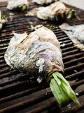Close up of grilled fish Stock Photo