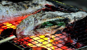 Close up grilled fresh fishs with salt, Delicious fresh fish at countryside in holiday, healthy food. Royalty Free Stock Image