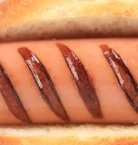 Close up of grilled hot dog. Stock Image