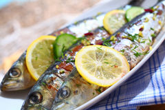 Close-up of grilled sardines on a platter outdoors Royalty Free Stock Photo