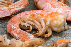 Close-up grilled shrimp Royalty Free Stock Image